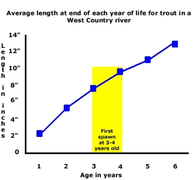 bigger trout are older
