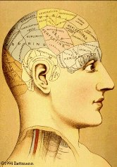 Faculties shown on phrenologist's model