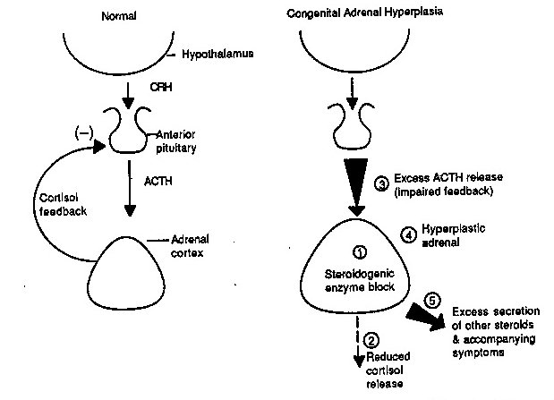 cah genital diagram cah enzyme diagram