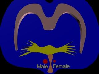 Australian testosterone study supplements